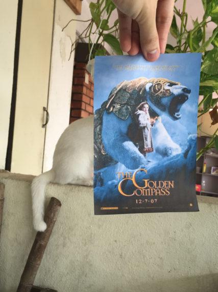 Новини  Коти і постери з фільмів: кумедні колажі фотографа з Малайзії